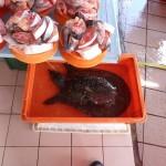 Levende zeeschildpad