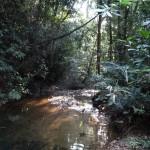 Jungel riviertje