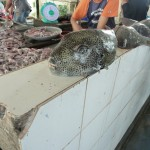 Lekkere vis op de vismarkt... vers gevangen!